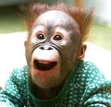 Monkey-HappyFace