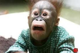 Monkey-SurprisedFace