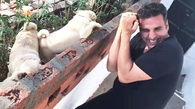 Watch Akshay Kumar's boxing with a bunch of pugs will make your day