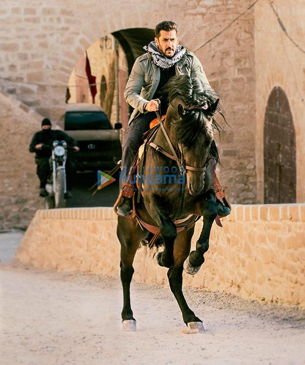 Tiger-hunts-on-a-horseback-in-Morocco