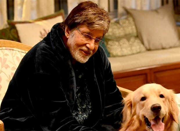 Amitabh Bachchan praises the initiative of 'I Luv Mumbai Foundation' in feeding stray animals, sends a personal video for the welfare of four-legged buddies